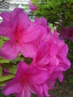 flower_and_light.jpg